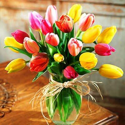 Тюльпаны - Tulip a gesneriana L (cultorum)