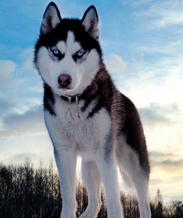 фото красивых собак в 2018 году
