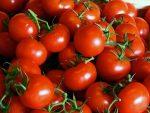 Детерминантные сорта помидоров - что это такое