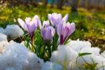 Русские народные приметы про погоду на март
