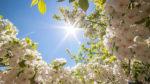 Русские народные приметы про погоду на май